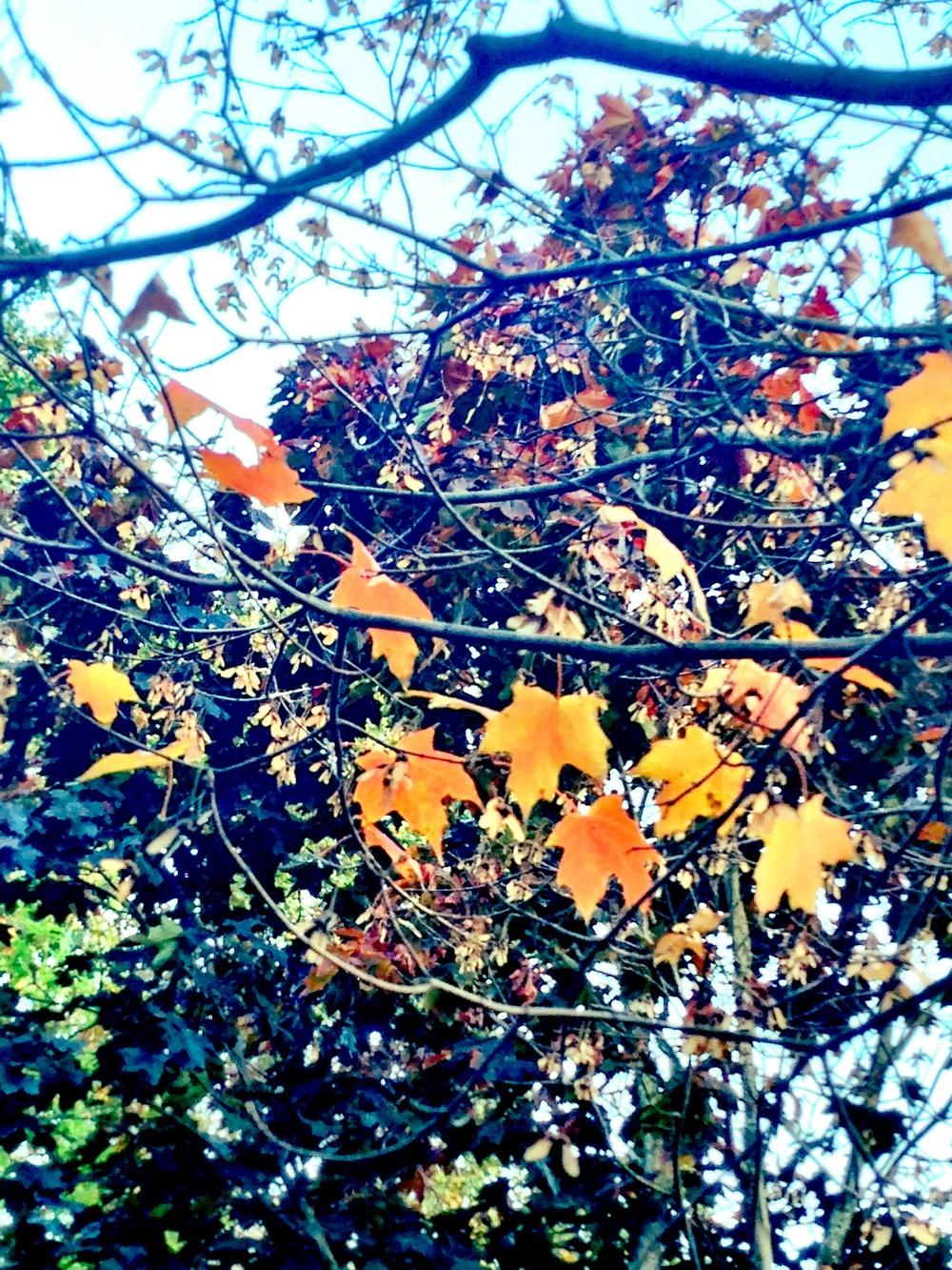 Photo Oct 26, 5 23 53 PM.jpg