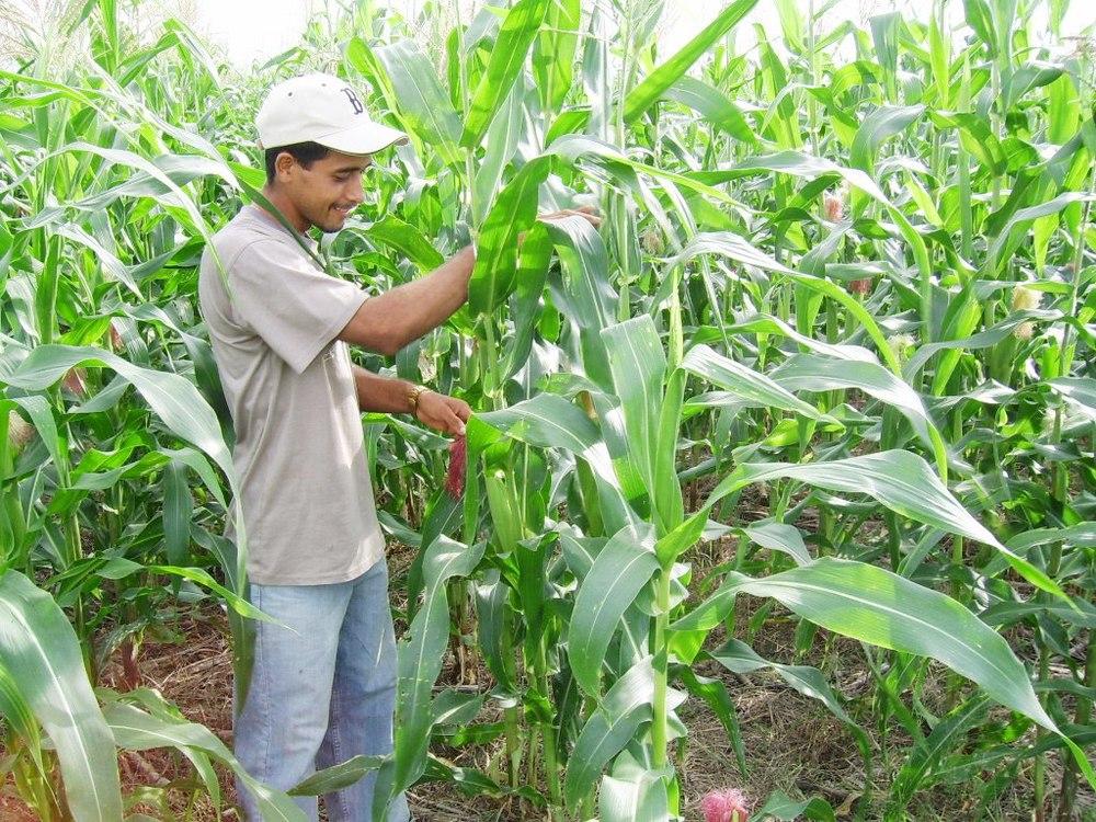 Agricultor en Panamá