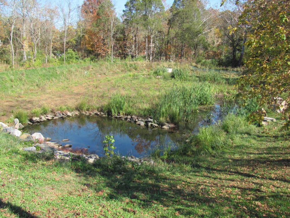 Meadows Stormwater Wetland, Greeneville, TN