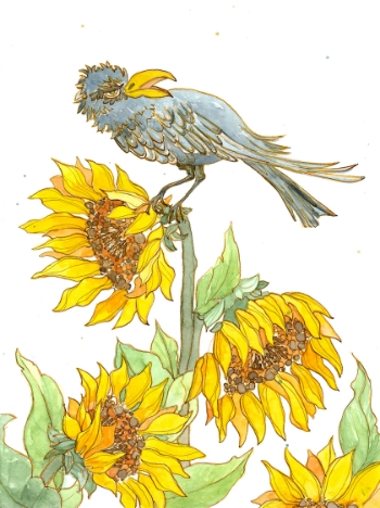 Crow:Sunflowers_300pix.jpg