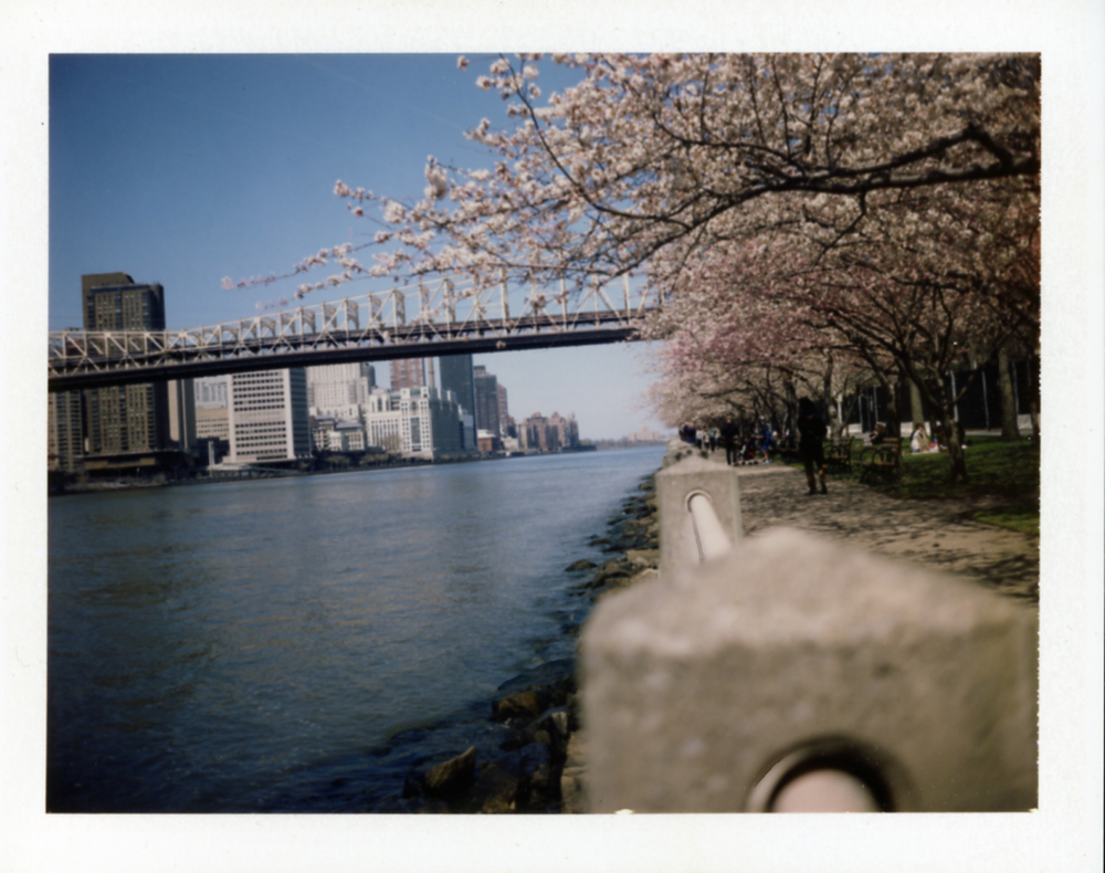 Polaroid240_flat.jpg