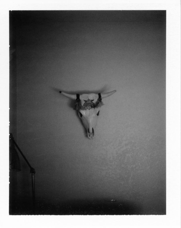 Polaroid245_flat.jpg