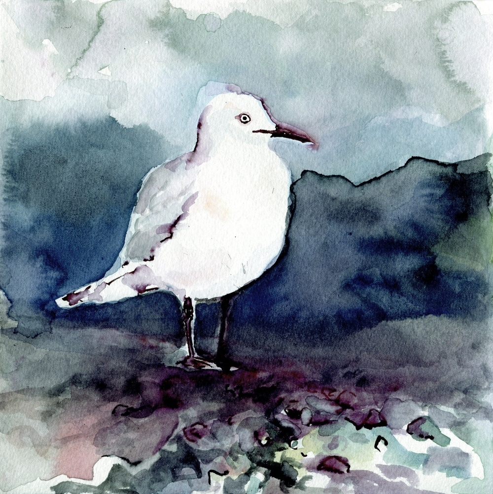 The endangered Black-billed Gull of New Zealand (click to enlarge)