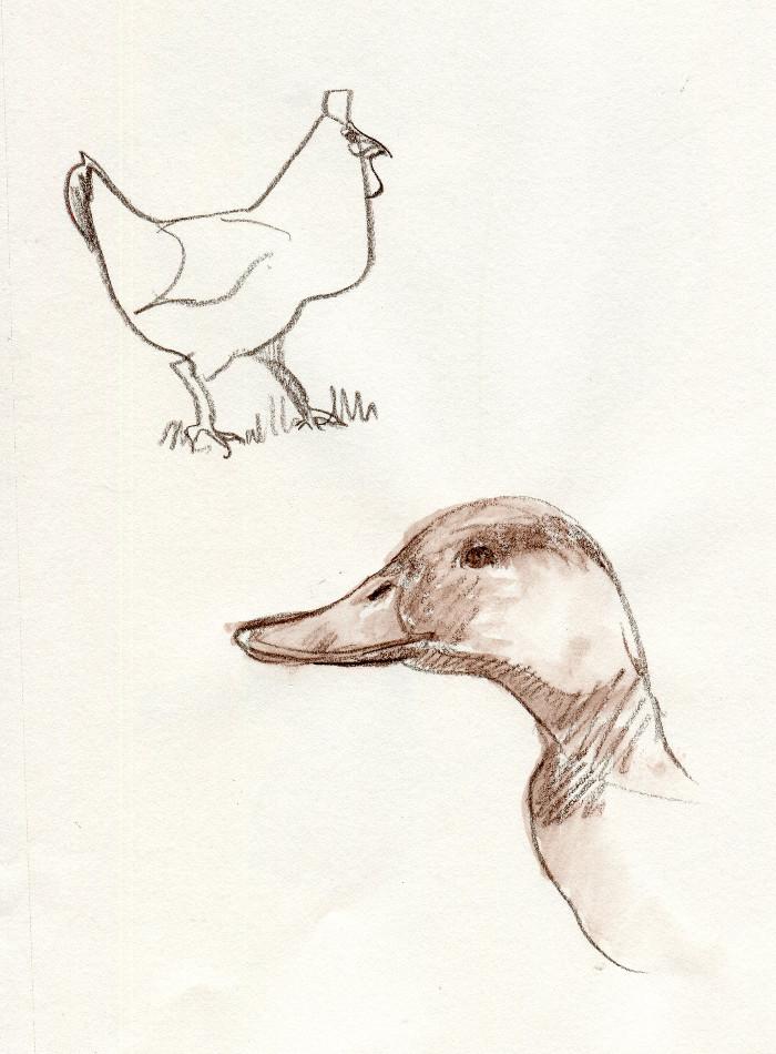 -fowl141.jpg