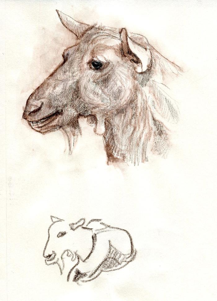 -goat136.jpg