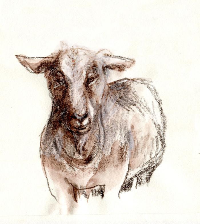 -goat135b.jpg