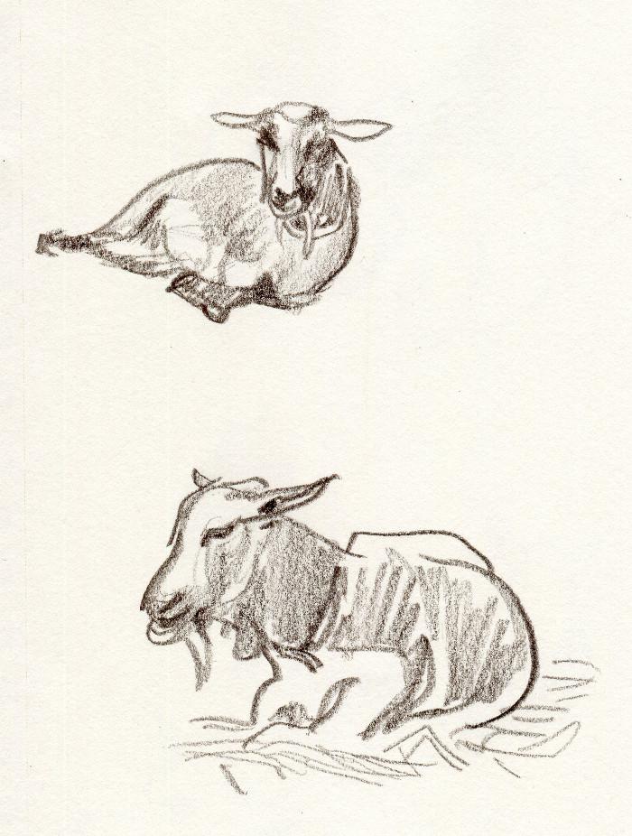-goat137.jpg