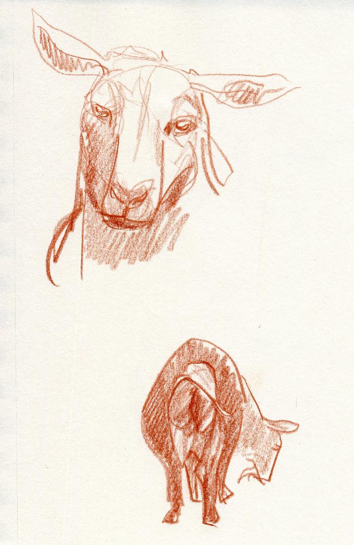 -goat139.jpg
