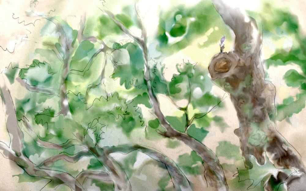 zee-tree-new2.JPG
