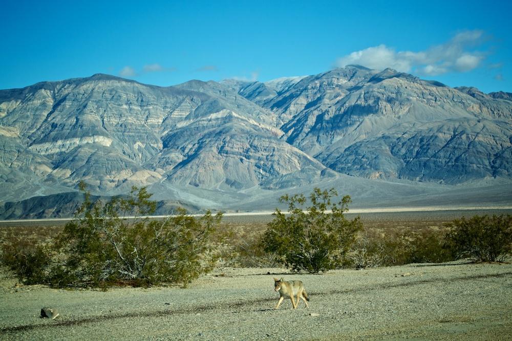 LA, Death Valley and Joshua Tree
