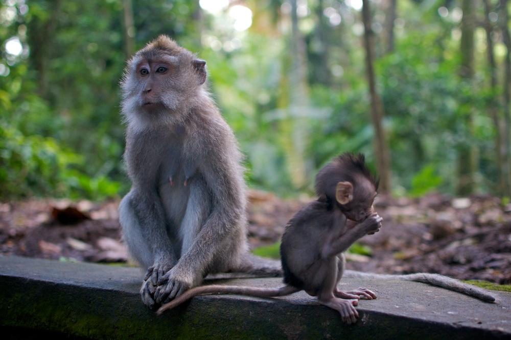 You gotta love it - Bali: Part 1