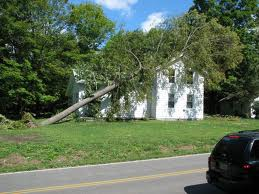 Most homeowners policies would cover the total cost of removing this but there would be a limit to the coverage for stump and trunk left in the yard.