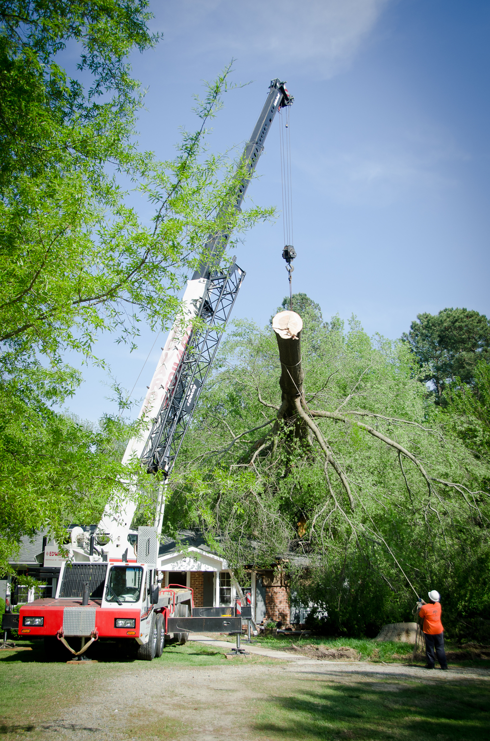 Crane removing large tree after wind storm