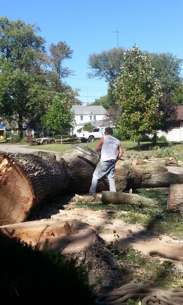 Large Tree removal from site