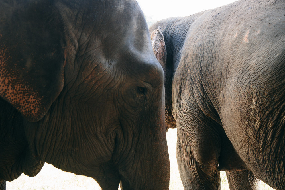 Ren Photography_Elephants_003.jpg