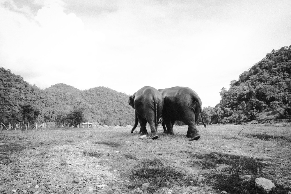 Ren Photography_Elephants_0014.jpg