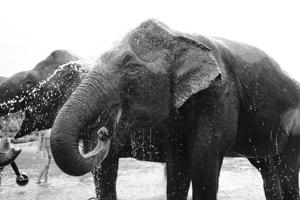 Ren Photography_Elephants_0011.jpg