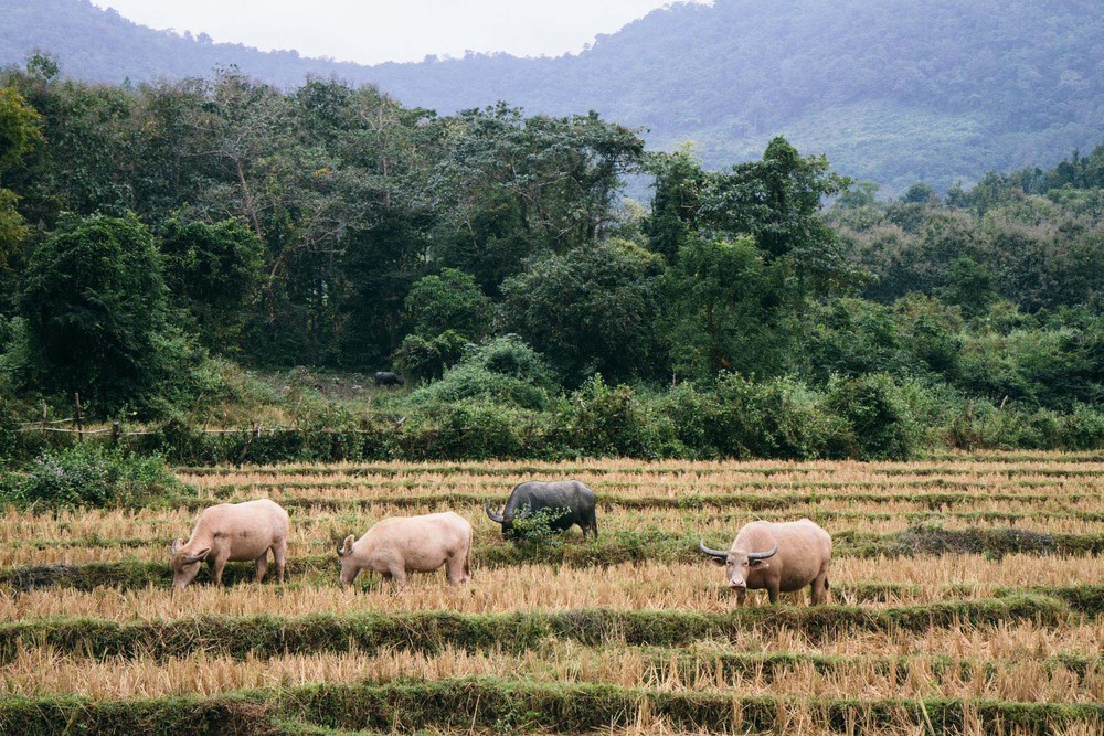 RenPhotography_Laos_18.jpg
