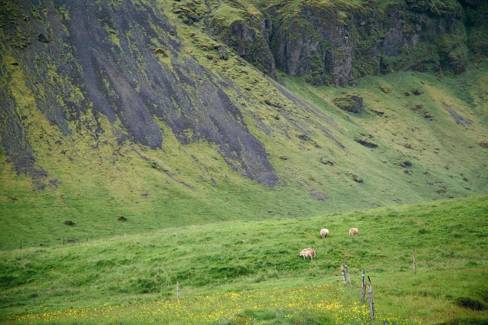Iceland_renyagolnitzer_06.jpg