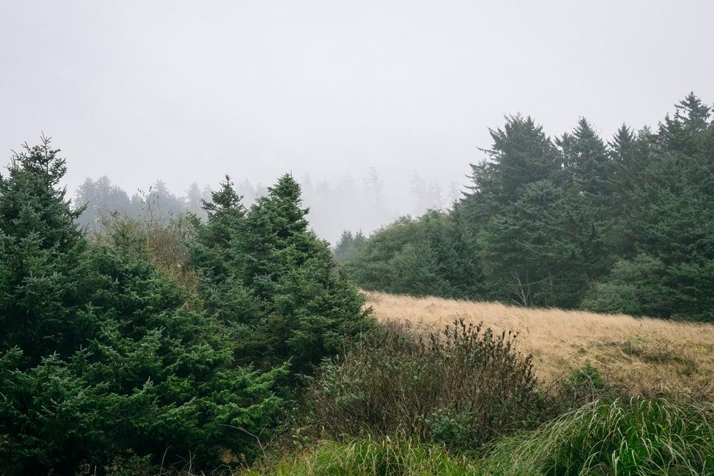 20150901_Oregon_8.jpg