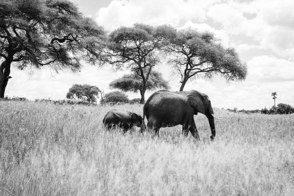 160229_Tanzania_244.jpg
