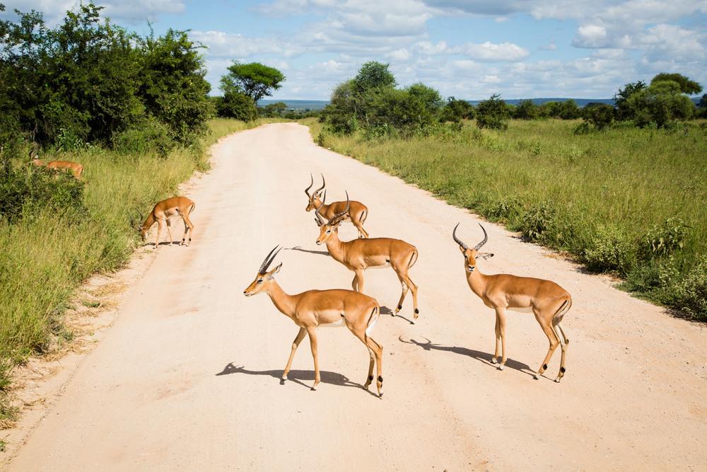160229_Tanzania_282.jpg