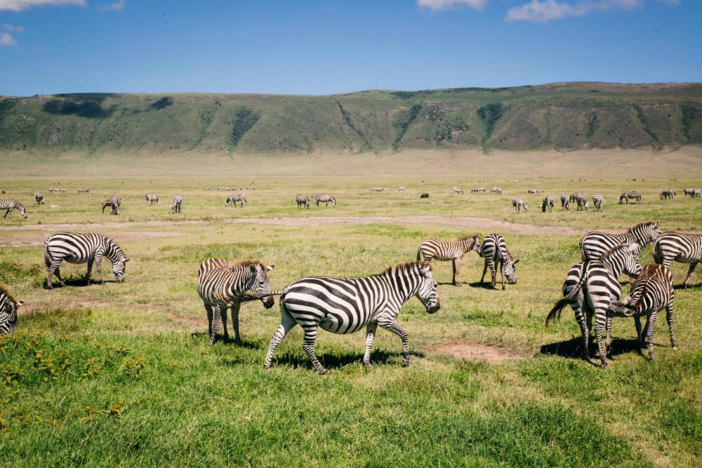 160301_Tanzania_367.jpg