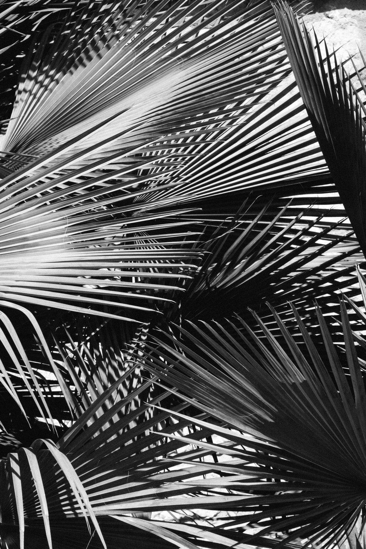 170119_Oaxaca_3339.jpg
