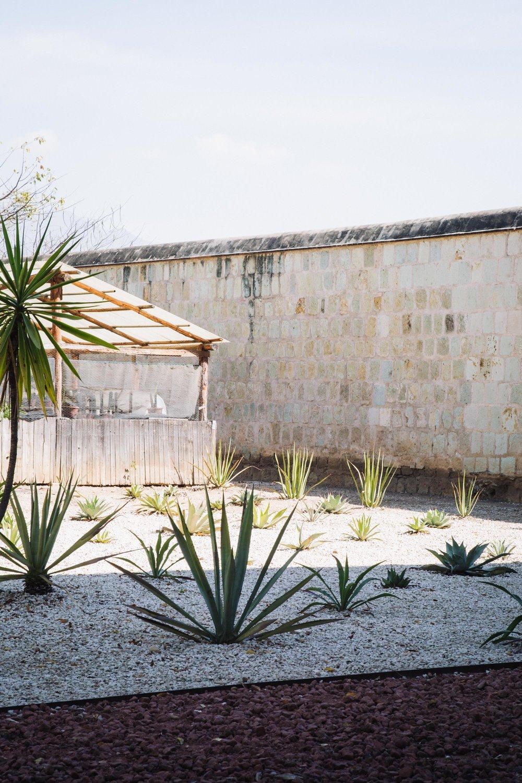 170119_Oaxaca_Botanical_01.jpg