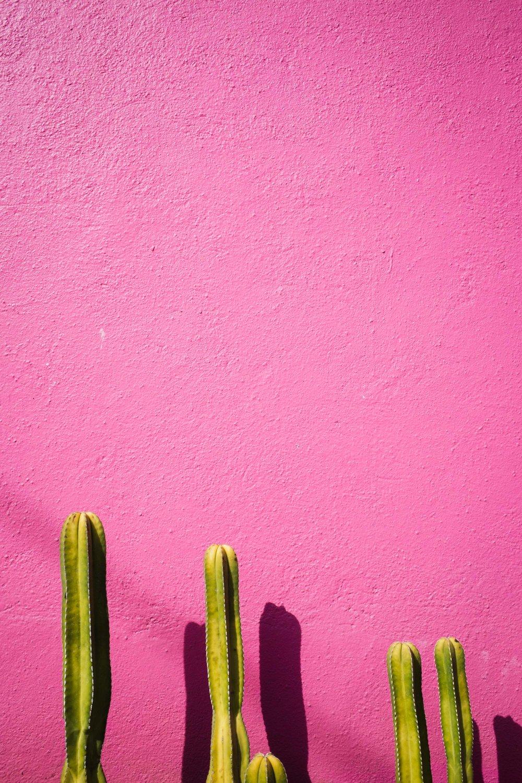 170119_Oaxaca_Street_61.jpg