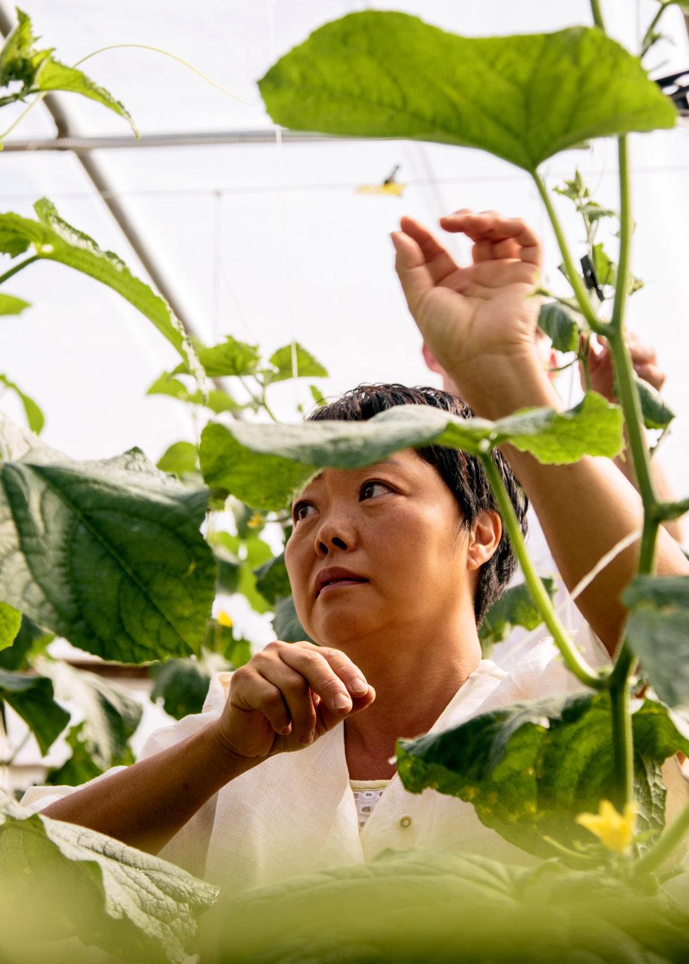 UNION SQUARE EVENTS // BODHI TREE FARM