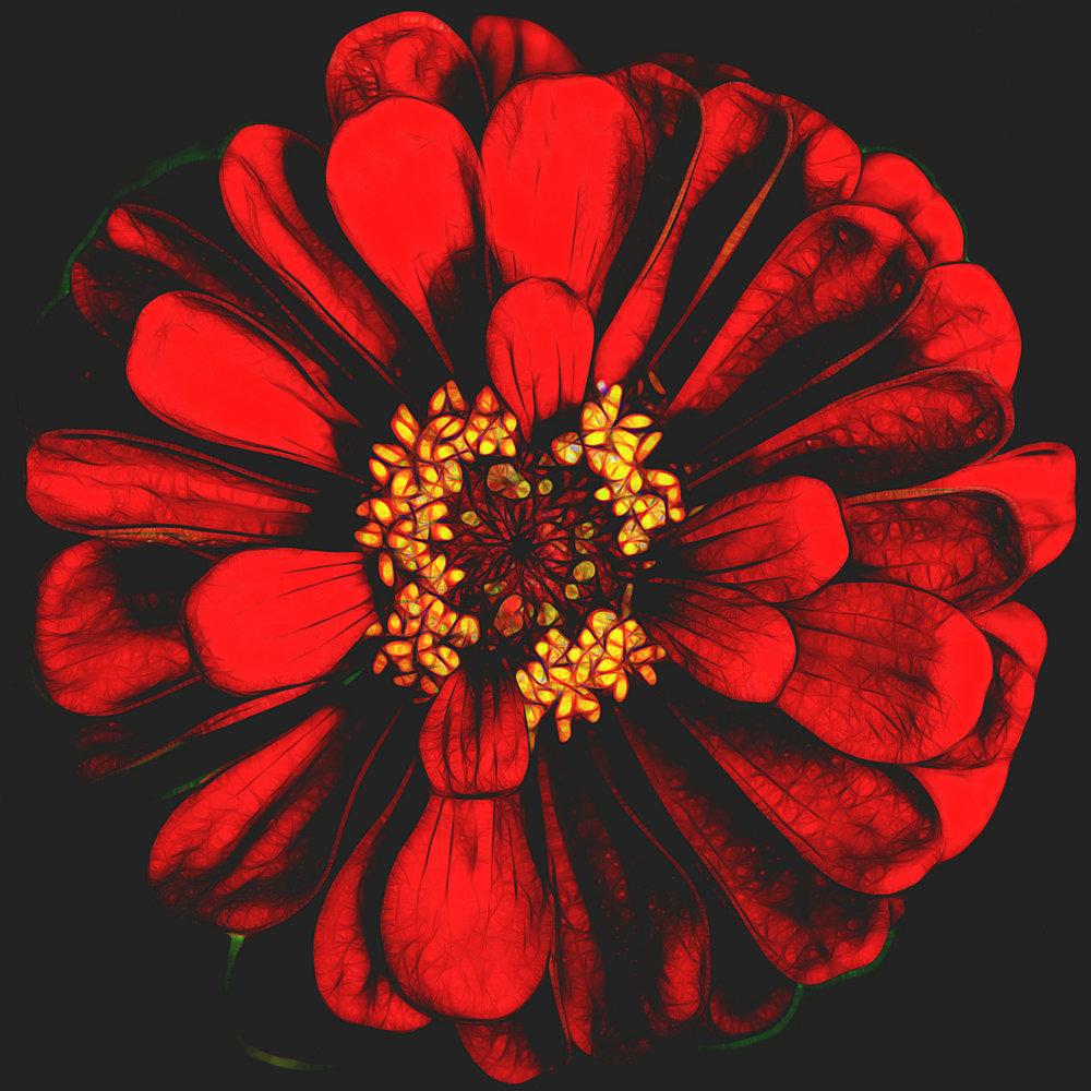24red flower.jpg