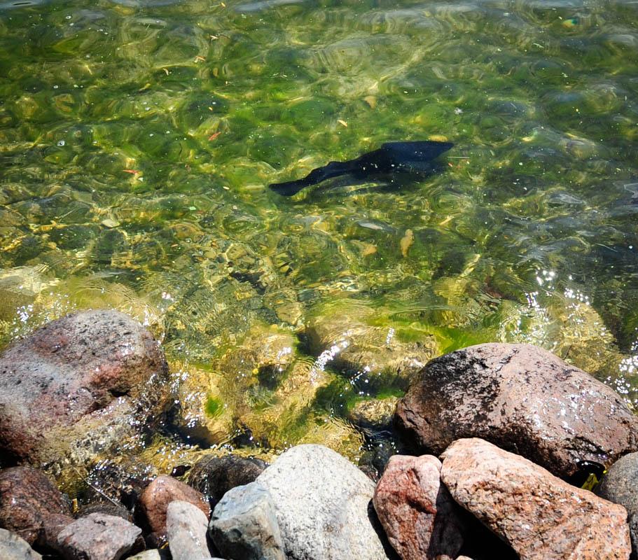 Visiting Catfish