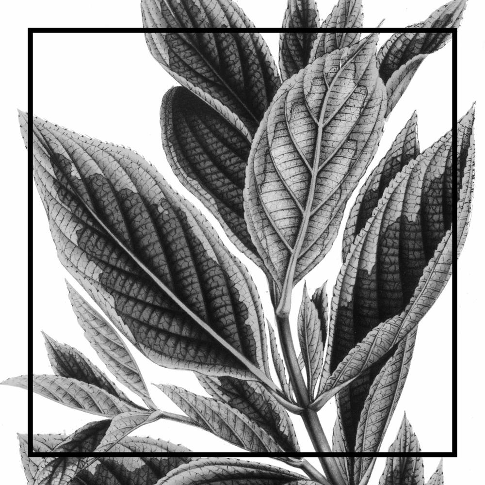 Ava Stationery - Flora