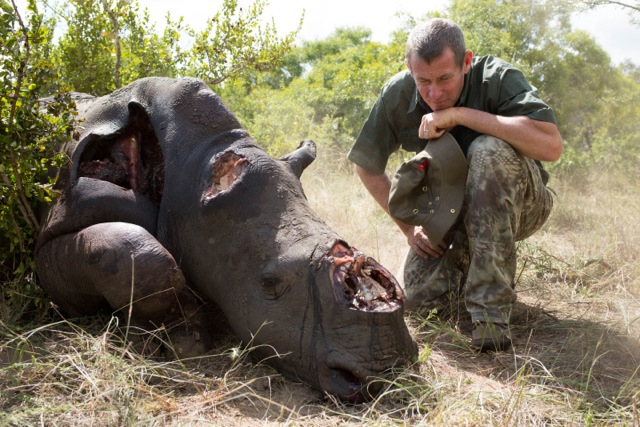the reality of the rhino war - it breaks my heart to see this but i just hope that these images will help people realize how much the wildlife warriors on the front line need your help
