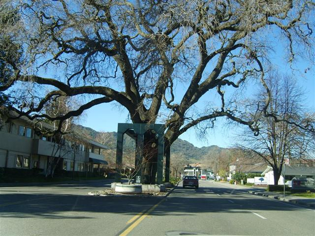 Danville Oak Tree