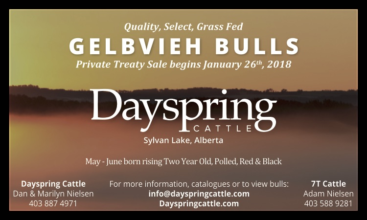 70339 Dayspring Cattle - Ad 2.jpg