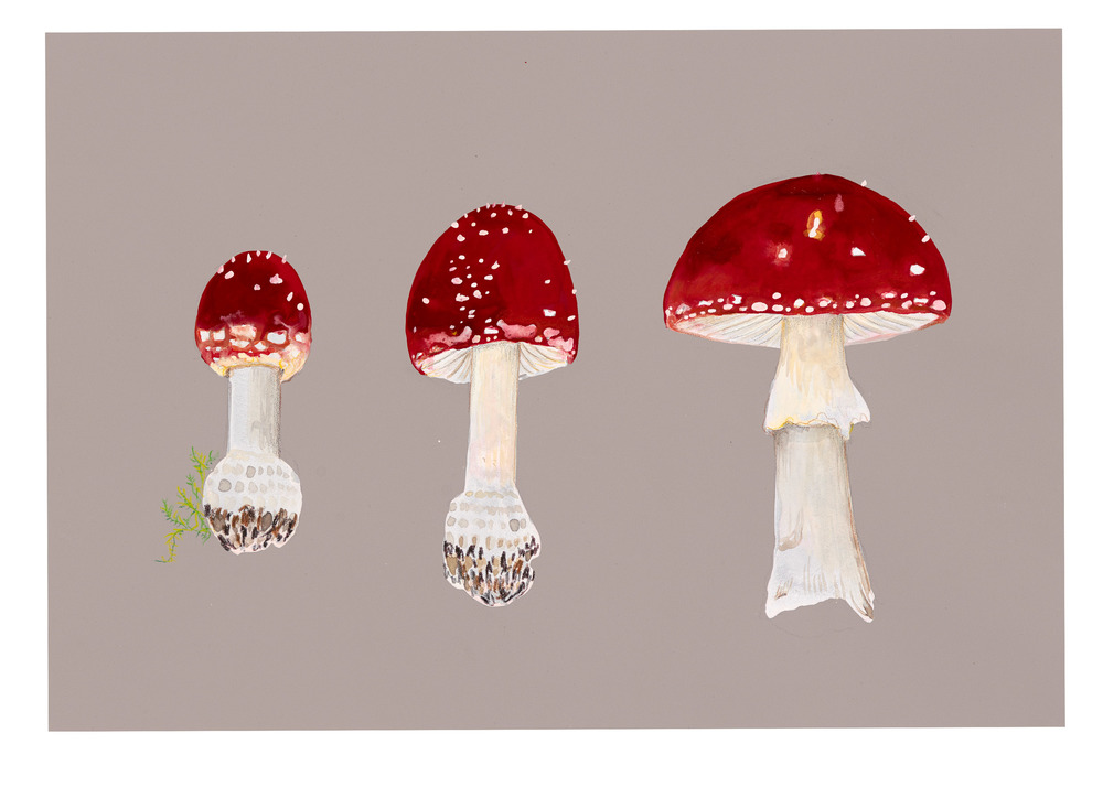 Three Toadstools, 2015.
