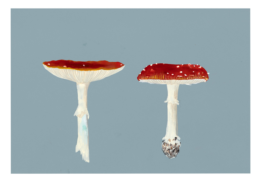 Two Toadstools, 2015.
