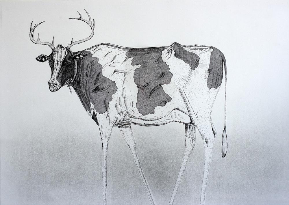 Cow_Muitlation Antlers1_50x46cm.jpg