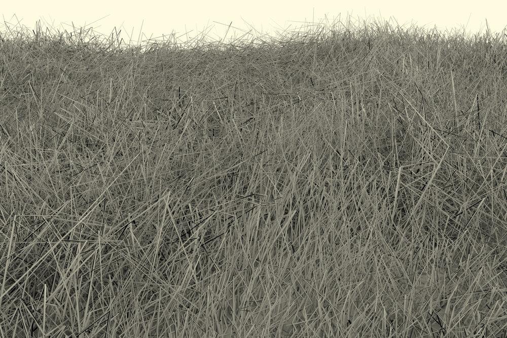 grassscape1.jpg