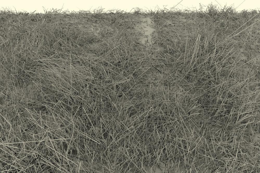grassscape4.jpg