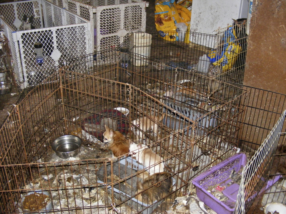 The Dead Cockroach Blog: Oprah Tells You About Puppy Mills