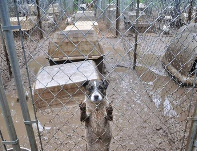 Avoid small, makeshift constructed kennels that are dirty, overcrowded, and do not provide adequate protection from the elements.  Image from CBS Detroit