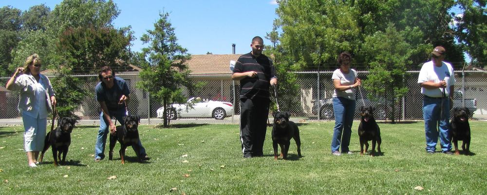 "Jasko (far right) and his offspring. Jasko, as well as this image, is owned by James and Susan Marrone of Haustier Rottweilers. Jasko is the only non-American born, but this line-up shows us what people typically associate with ""German"" or ""Import"" Rottweilers!"