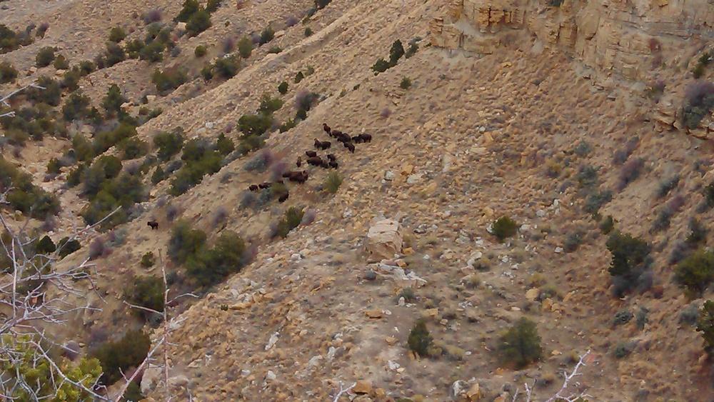 11172012 Buffalo Hunt (9).jpg