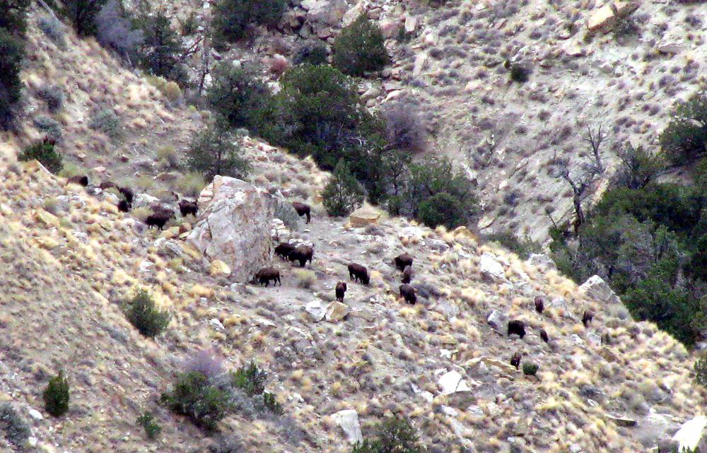 BuffaloViewing.jpg