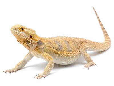 E Coli Reptiles Food Safety Talk 90: W...
