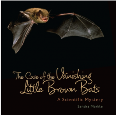 vanishing little brown bat