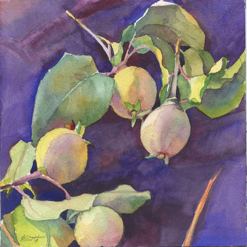 """Four Quince, Provence"", 7"" x 7"", watercolor and graphite on Arches paper"